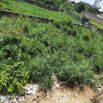 073. [FOR SALE] A PLOT OF LAND @GRA, AWKA. 3